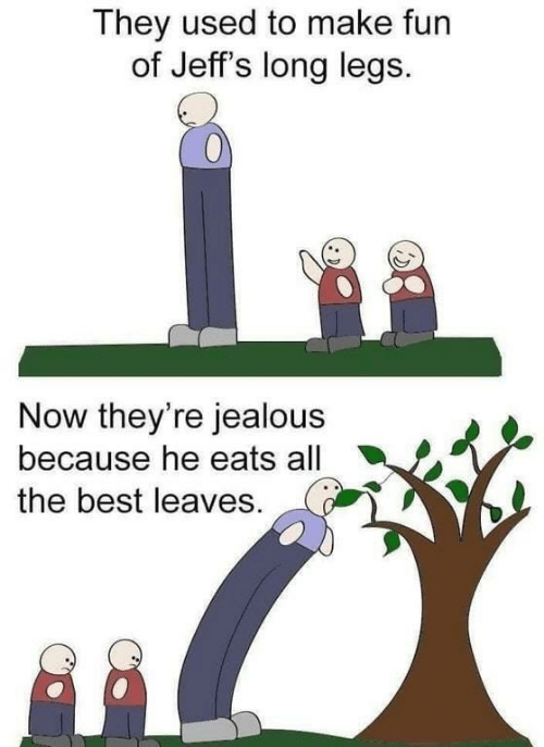 leaves: They used to make fun  of Jeff's long legs.  Now they're jealous  because he eats all  the best leaves.