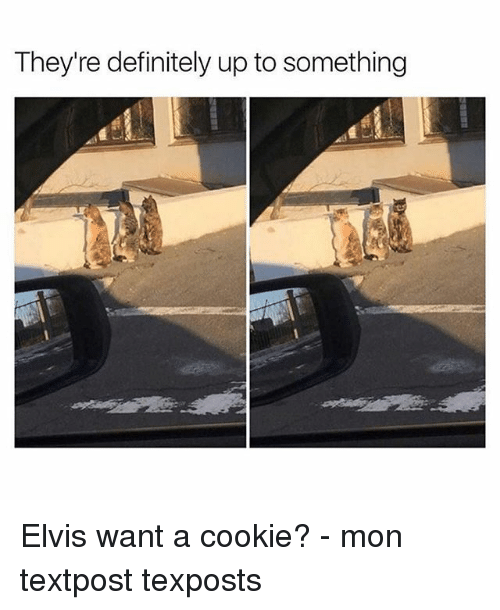 Definitely, Memes, and 🤖: They're definitely up to something Elvis want a cookie? - mon textpost texposts