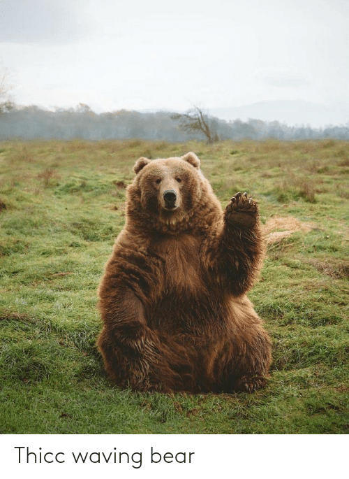 Bear: Thicc waving bear