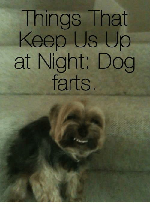 Dog Farted: Things That  Keep Us Up  at Night. Dog  farts