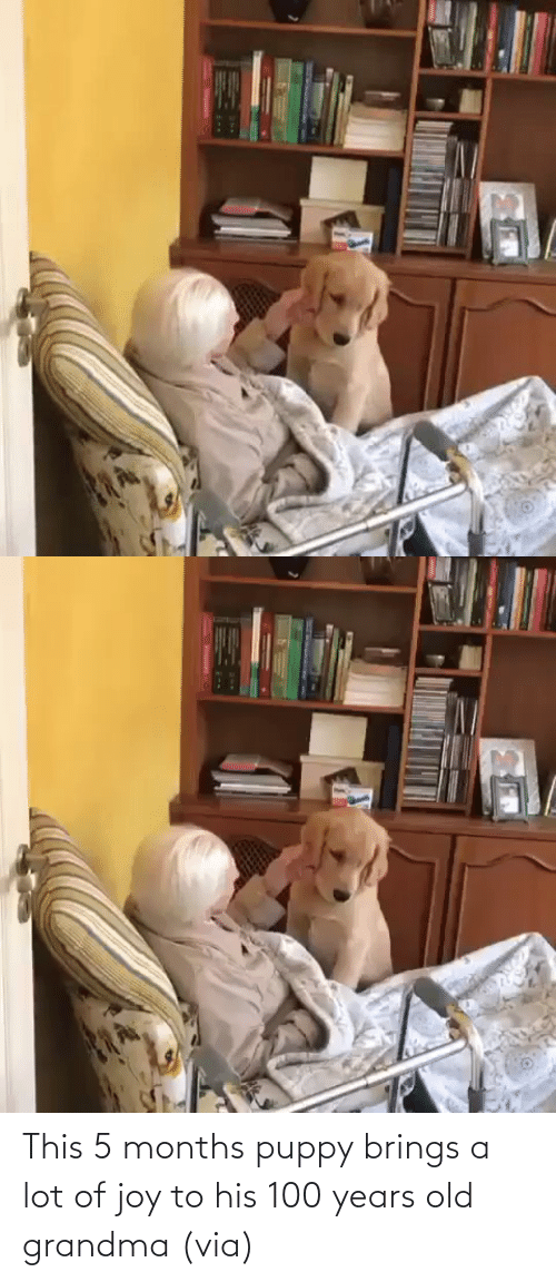 Lot: This 5 months puppy brings a lot of joy to his 100 years old grandma (via)