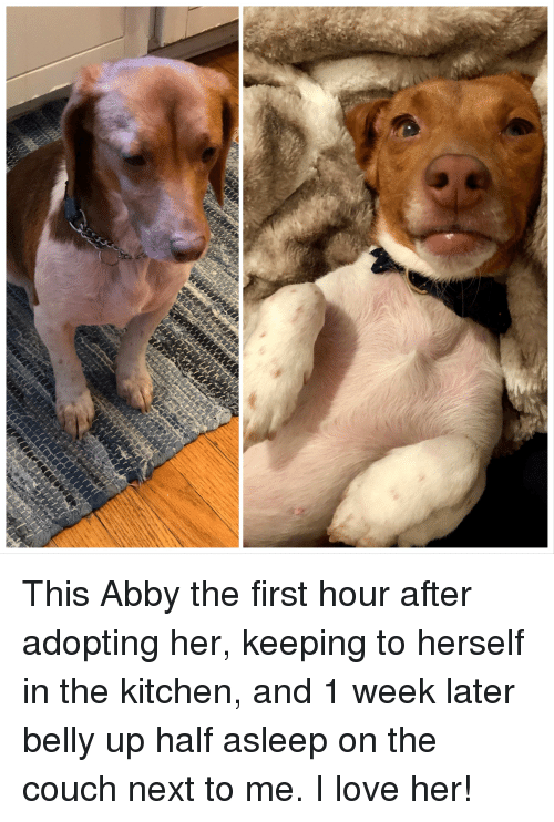 Love, Couch, and Her: This Abby the first hour after adopting her, keeping to herself in the kitchen, and 1 week later belly up half asleep on the couch next to me. I love her!