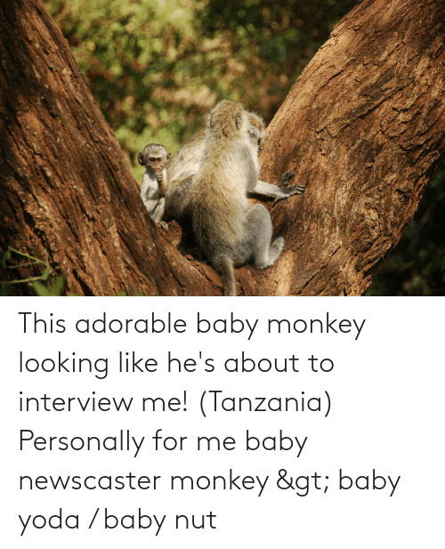 Me Baby: This adorable baby monkey looking like he's about to interview me! (Tanzania) Personally for me baby newscaster monkey > baby yoda / baby nut