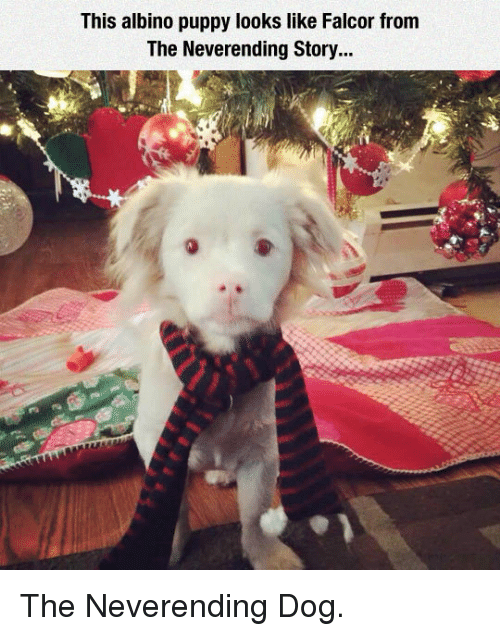 Puppy, Dog, and Albino: This albino puppy looks like Falcor from  The Neverending Story... <p>The Neverending Dog.</p>