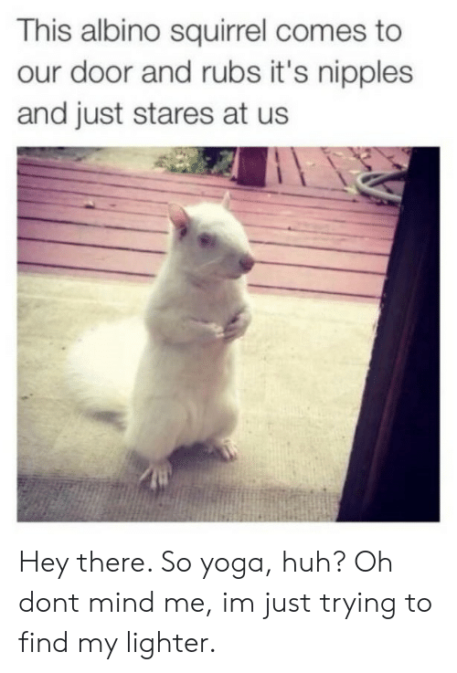 Huh, Squirrel, and Yoga: This albino squirrel comes to  our door and rubs it's nipples  and just stares at us Hey there. So yoga, huh? Oh dont mind me, im just trying to find my lighter.