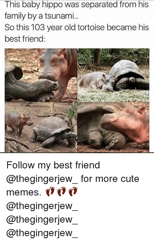 Hippoe: This baby hippo was separated from his  family by a tsunami.  So this 103 year old tortoise became his  best friend: Follow my best friend @thegingerjew_ for more cute memes. 👣👣👣 @thegingerjew_ @thegingerjew_ @thegingerjew_