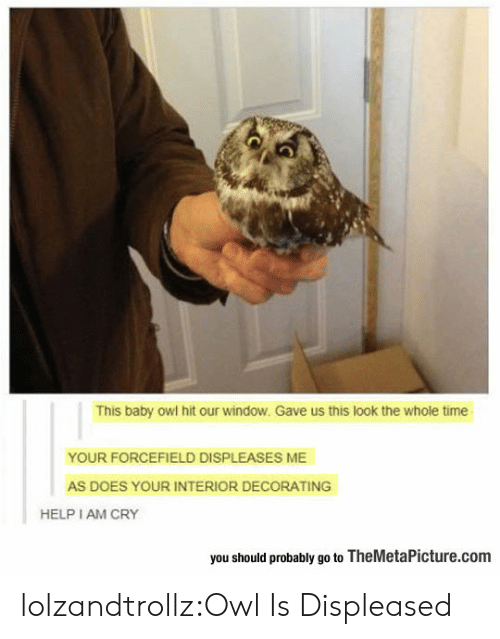 Tumblr, Blog, and Help: This baby owl hit our window. Gave us this look the whole time  YOUR FORCEFIELD DISPLEASES ME  AS DOES YOUR INTERIOR DECORATING  HELP I AM CRY  you should probably go to TheMetaPicture.com lolzandtrollz:Owl Is Displeased