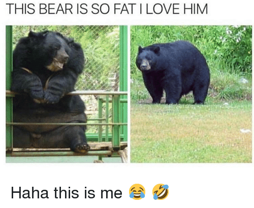 Love, Memes, and Bear: THIS BEAR IS SO FAT I LOVE HIM Haha this is me 😂 🤣