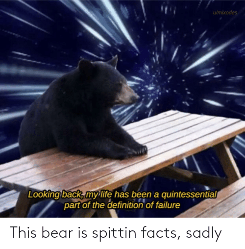 sadly: This bear is spittin facts, sadly