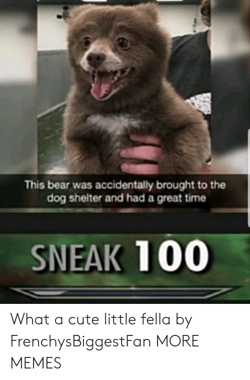 Cute, Dank, and Memes: This bear was accidentally brought to the  dog shelter and had a great time  SNEAK 100 What a cute little fella by FrenchysBiggestFan MORE MEMES