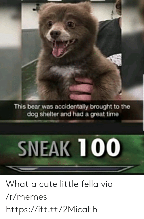 Cute, Memes, and Bear: This bear was accidentally brought to the  dog shelter and had a great time  SNEAK 100 What a cute little fella via /r/memes https://ift.tt/2MicaEh