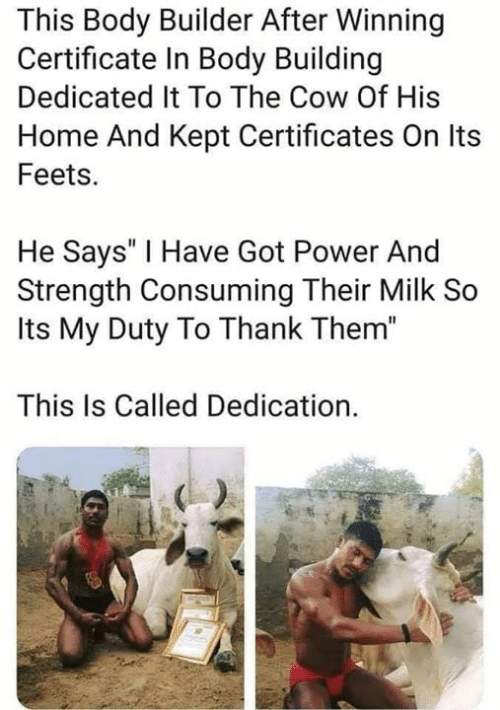 "Memes, Home, and Power: This Body Builder After Winning  Certificate In Body Building  Dedicated It To The Cow Of His  Home And Kept Certificates On Its  Feets.  He Says' I Have Got Power And  Strength Consuming Their Milk So  Its My Duty To Thank Them""  This Is Called Dedication."