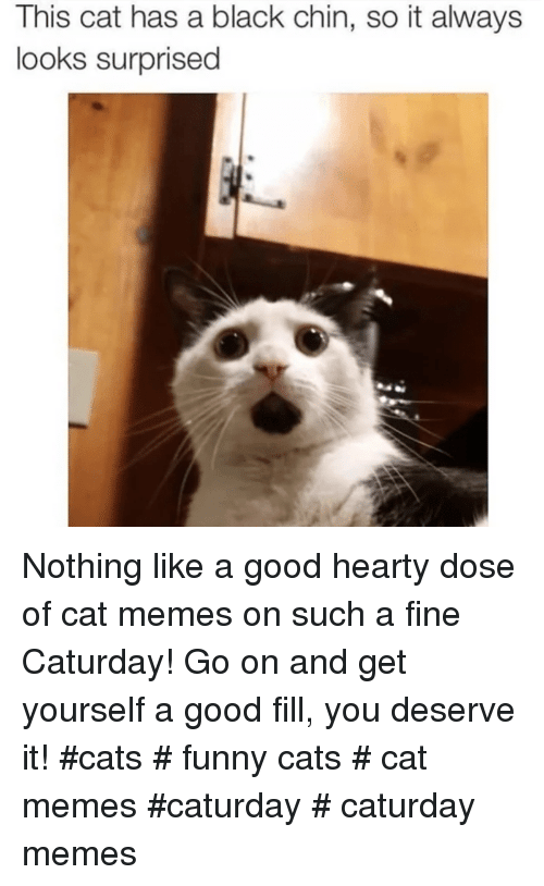 Cats, Caturday, and Funny: This cat has a black chin, so it always  looks surprised Nothing like a good hearty dose of cat memes on such a fine Caturday! Go on and get yourself a good fill, you deserve it! #cats # funny cats # cat memes #caturday # caturday memes