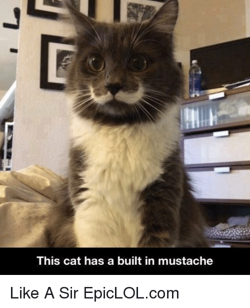 Like A Sir: This cat has a built in mustache Like A Sir