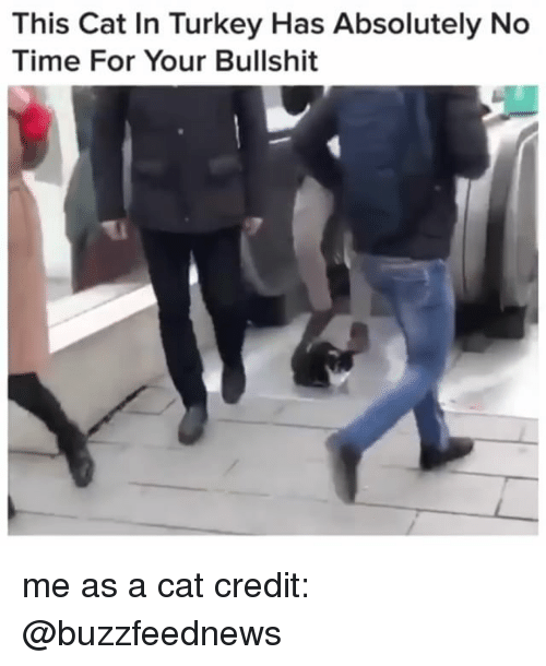 Time, Turkey, and Relatable: This Cat In Turkey Has Absolutely No  Time For Your Bullshit me as a cat credit: @buzzfeednews