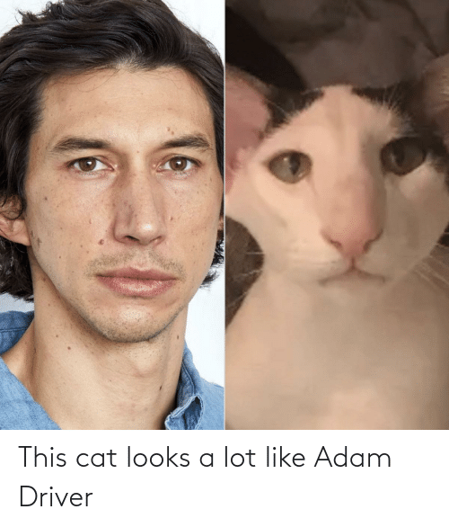 cat: This cat looks a lot like Adam Driver