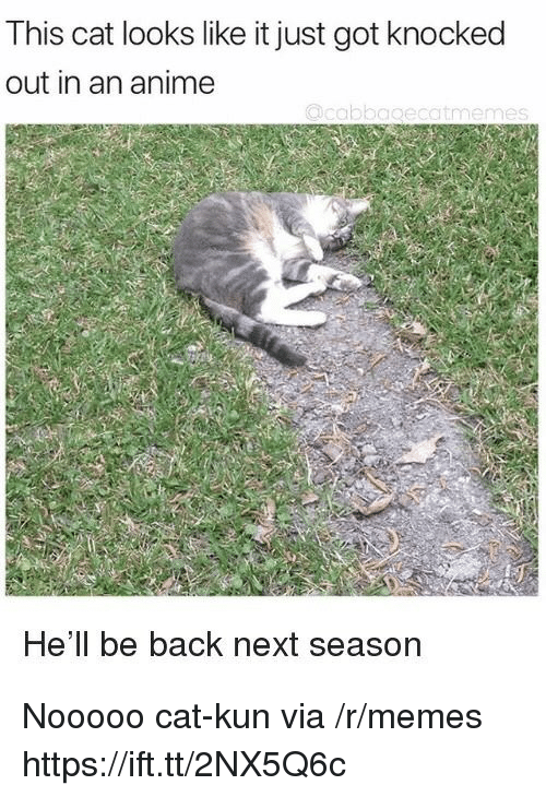 Anime, Memes, and Hell: This cat looks like it just got knocked  out in an anime  He'll be back next season Nooooo cat-kun via /r/memes https://ift.tt/2NX5Q6c