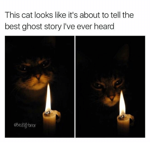 Memes, Best, and Ghost: This cat looks like it's about to tell the  best ghost story I've ever heard  Best0oror