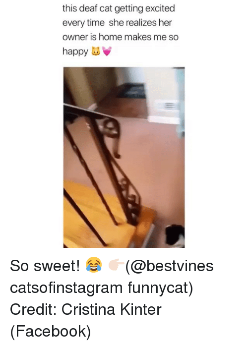 Facebook, Memes, and Happy: this deaf cat getting excited  every time she realizes her  owner is home makes me so  happy as So sweet! 😂 👉🏻(@bestvines catsofinstagram funnycat) Credit: Cristina Kinter (Facebook)