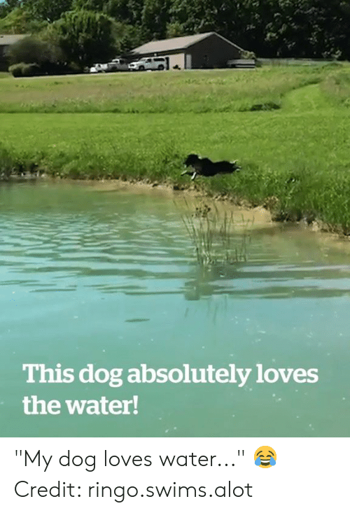 """Water, Dog, and Ringo: This dog absolutely loves  the water! """"My dog loves water..."""" 😂  Credit: ringo.swims.alot"""