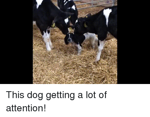 Baby, Baby Cow, and Dog: This dog getting a lot of attention!