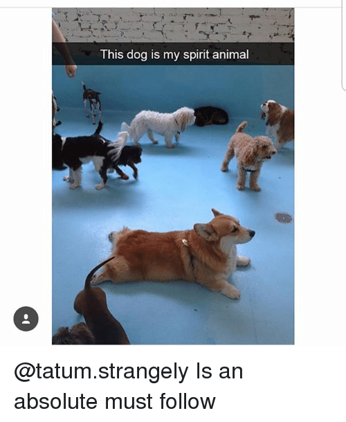 Memes, Animal, and Spirit: This dog is my spirit animal @tatum.strangely Is an absolute must follow