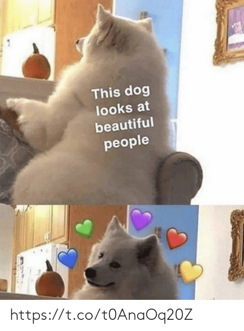 Beautiful, Memes, and 🤖: This dog  looks at  beautiful  people https://t.co/t0AnaOq20Z