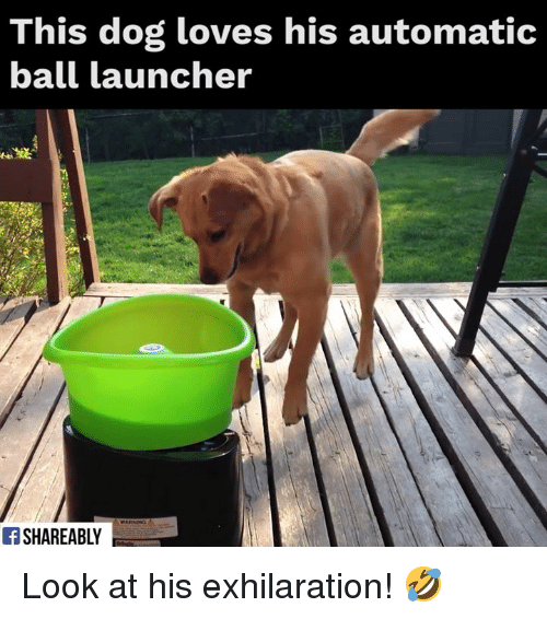 launcher: This dog loves his automatic  ball launcher  Ff SHAREABLY Look at his exhilaration! 🤣