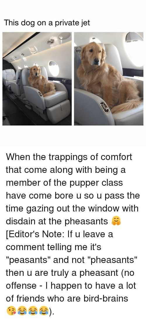 "comfortability: This dog on a private jet When the trappings of comfort that come along with being a member of the pupper class have come bore u so u pass the time gazing out the window with disdain at the pheasants 🤗 [Editor's Note: If u leave a comment telling me it's ""peasants"" and not ""pheasants"" then u are truly a pheasant (no offense - I happen to have a lot of friends who are bird-brains 😘😂😂😂)."