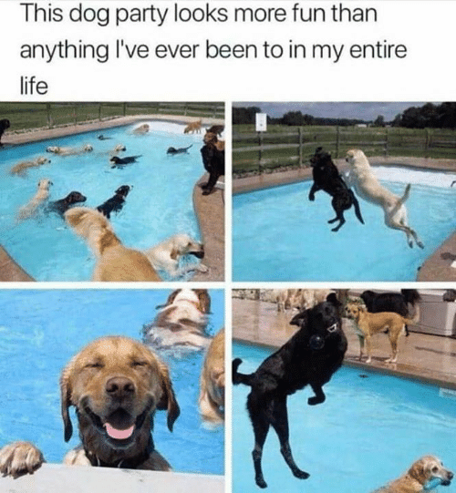 Life, Memes, and Party: This dog party looks more fun than  anything I've ever been to in my entire  life
