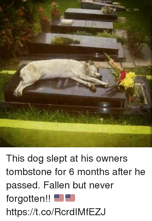 tombstone: This dog slept at his owners tombstone for 6 months after he passed. Fallen but never forgotten!! 🇺🇸🇺🇸 https://t.co/RcrdIMfEZJ