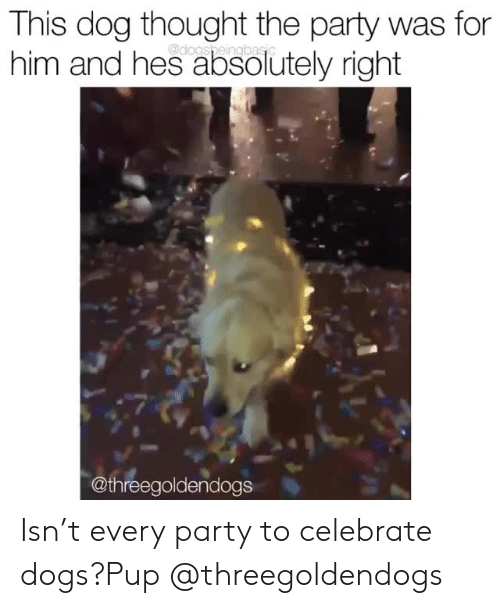 Dogs, Instagram, and Party: This dog thought the party was for  him and hes absolutely right  @threegoldendogs Isn't every party to celebrate dogs?Pup @threegoldendogs