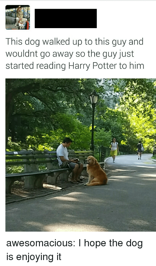 Harry Potter, Tumblr, and Blog: This dog walked up to this guy and  wouldnt go away so the guy just  started reading Harry Potter to him awesomacious:  I hope the dog is enjoying it