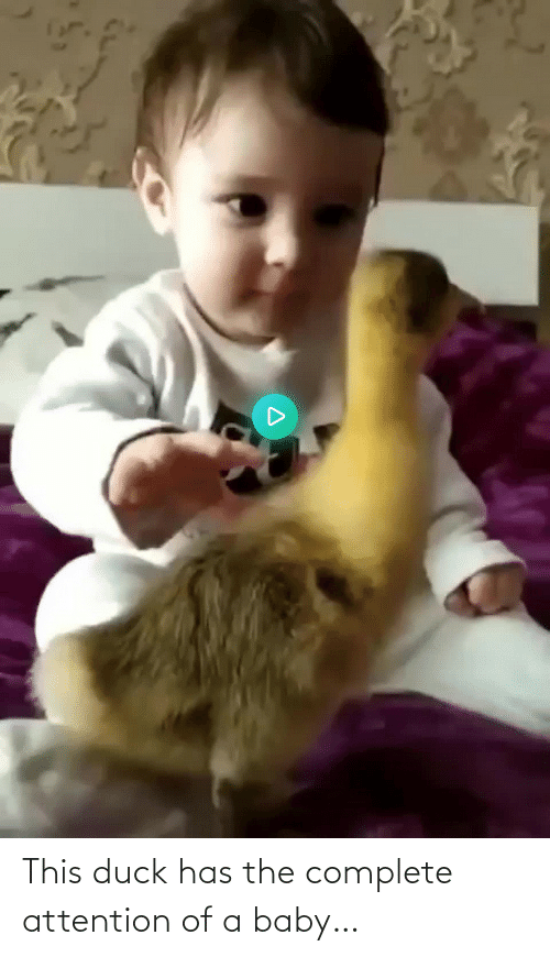 Duck: This duck has the complete attention of a baby…
