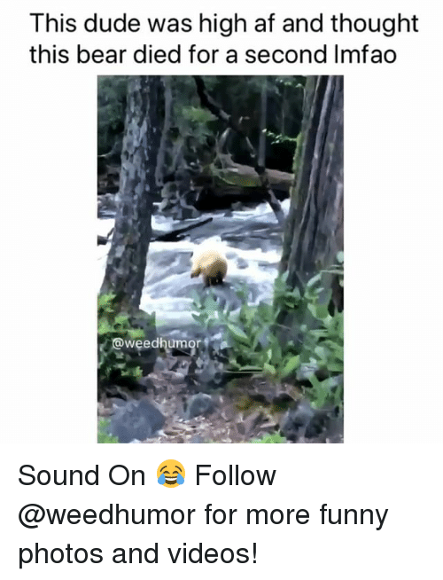 Af, Dude, and Funny: This dude was high af and thought  this bear died for a second Imfao  weedhumor Sound On 😂 Follow @weedhumor for more funny photos and videos!