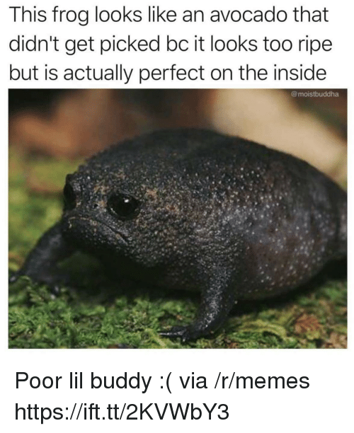 Memes, Avocado, and Frog: This frog looks like an avocado that  didn't get picked bc it looks too ripe  but is actually perfect on the inside  @moistbuddha Poor lil buddy :( via /r/memes https://ift.tt/2KVWbY3
