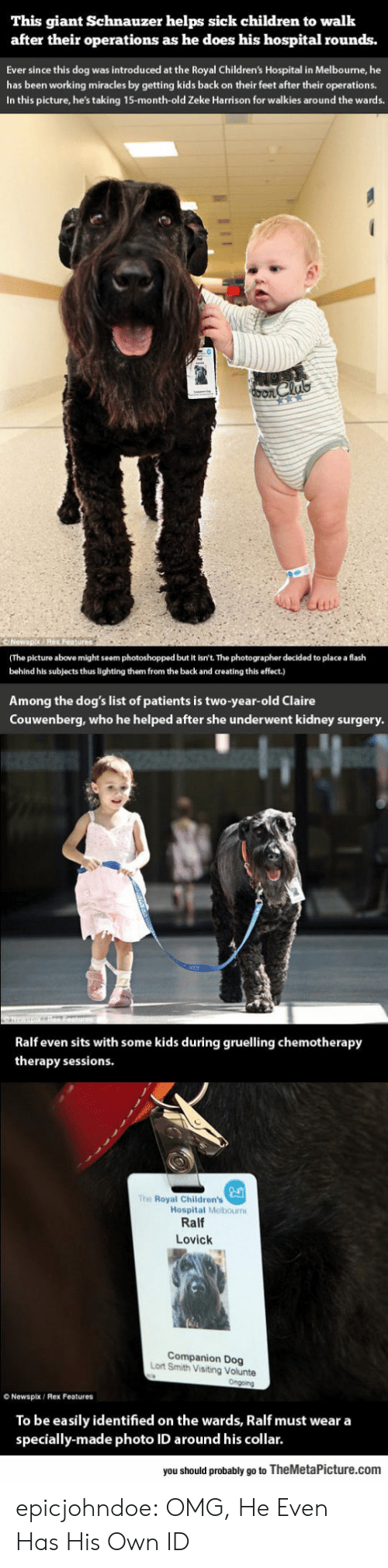 Schnauzer: This giant Schnauzer helps sick children to walk  after their operations as he does his hospital rounds.  Ever since this dog was introduced at the Royal Children's Hospital in Melbourne, he  has been working miracles by getting kids back on their feet after their operations.  In this picture, he's taking 15-month-old Zeke Harrison for walkies around the wards.  (The picture above might seem photoshopped but it isn't. The photographer decided to place a flash  behind his subjects thus lighting them from the back and creating this effect.)  Among the dog's list of patients is two-year-old Claire  Couwenberg, who he helped after she underwent kidney surgery  Ralf even sits with some kids during gruelling chemotherapy  therapy sessions  The Royal Children's  Hospital Melbourn  Ralf  Lovick  Companion Dog  Lort Smith Visiting Volunte  O Newspix/ Rex Features  To be easily identified on the wards, Ralf must wear a  specially-made photo ID around his collar.  you should probably go to TheMetaPicture.com epicjohndoe:  OMG, He Even Has His Own ID
