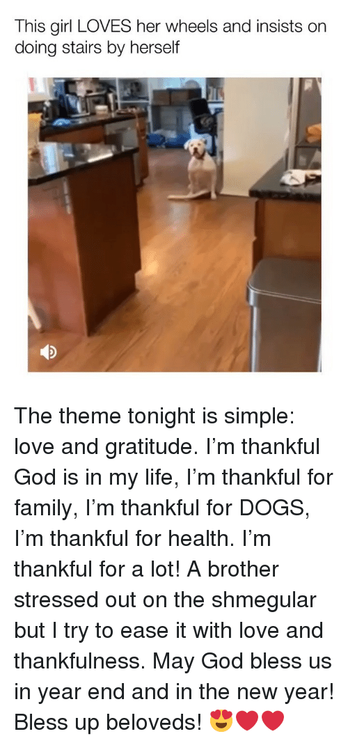 Bless Up, Dogs, and Family: This girl LOVES her wheels and insists on  doing stairs by herself The theme tonight is simple: love and gratitude. I'm thankful God is in my life, I'm thankful for family, I'm thankful for DOGS, I'm thankful for health. I'm thankful for a lot! A brother stressed out on the shmegular but I try to ease it with love and thankfulness. May God bless us in year end and in the new year! Bless up beloveds! 😍❤️❤️