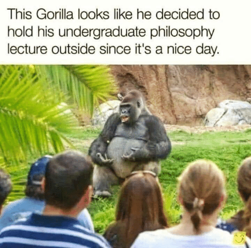 Philosophy, Nice, and Gorilla: This Gorilla looks like he decided to  hold his undergraduate philosophy  lecture outside since it's a nice day.