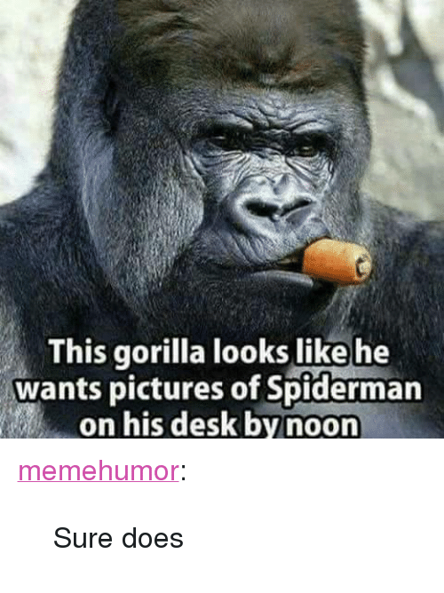 """Tumblr, Blog, and Desk: This gorilla looks like he  wants pictures of Spiderman  on his desk by noon <p><a href=""""http://memehumor.net/post/168095555989/sure-does"""" class=""""tumblr_blog"""">memehumor</a>:</p>  <blockquote><p>Sure does</p></blockquote>"""