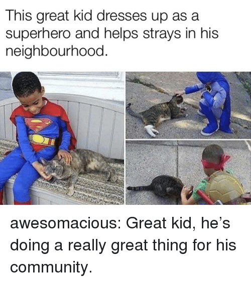 Community, Superhero, and Tumblr: This great kid dresses up asa  superhero and helps strays in his  neighbourhood. awesomacious:  Great kid, he's doing a really great thing for his community.