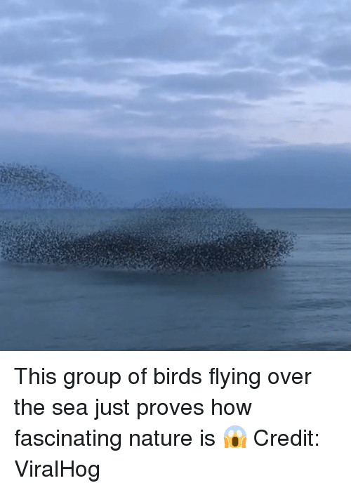 Birds, Nature, and How: This group of birds flying over the sea just proves how fascinating nature is 😱    Credit: ViralHog