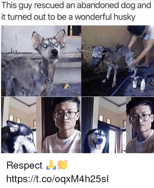 Memes, Respect, and Husky: This guy rescued an abandoned dog and  it turned out to be a wonderful husky Respect 🙏👏 https://t.co/oqxM4h25sI
