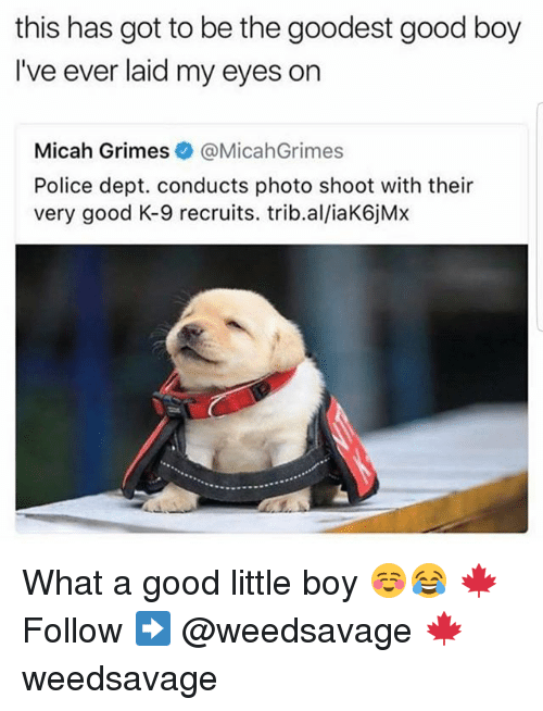 Memes, Police, and Good: this has got to be the goodest good boy  I've ever laid my eyes on  Micah Grimes&@MicahGrimes  Police dept. conducts photo shoot with their  very good K-9 recruits. trib.al/iaK6jMx What a good little boy ☺😂 🍁Follow ➡ @weedsavage 🍁 weedsavage