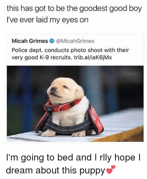 Memes, Police, and Good: this has got to be the goodest good boy  l've ever laid my eyes on  Micah Grimes@MicahGrimes  Police dept. conducts photo shoot with their  very good K-9 recruits. trib.al/iaK6jMx I'm going to bed and I rlly hope I dream about this puppy💕