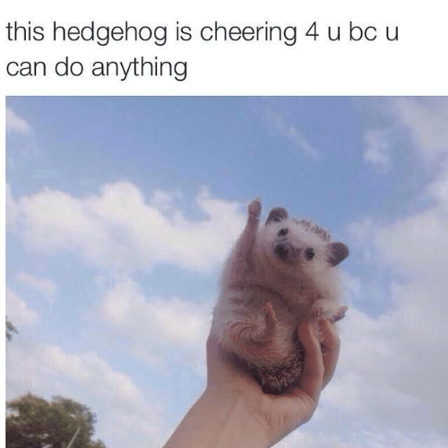 Hedgehog, Can, and This: this hedgehog is cheering 4 u bc u  can do anything
