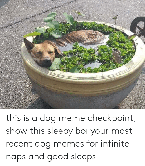 Dogs, Meme, and Memes: this is a dog meme checkpoint, show this sleepy boi your most recent dog memes for infinite naps and good sleeps