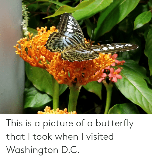washington: This is a picture of a butterfly that I took when I visited Washington D.C.