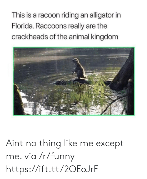animal kingdom: This is a racoon riding an alligator in  Florida. Raccoons really are the  crackheads of the animal kingdom Aint no thing like me except me. via /r/funny https://ift.tt/2OEoJrF