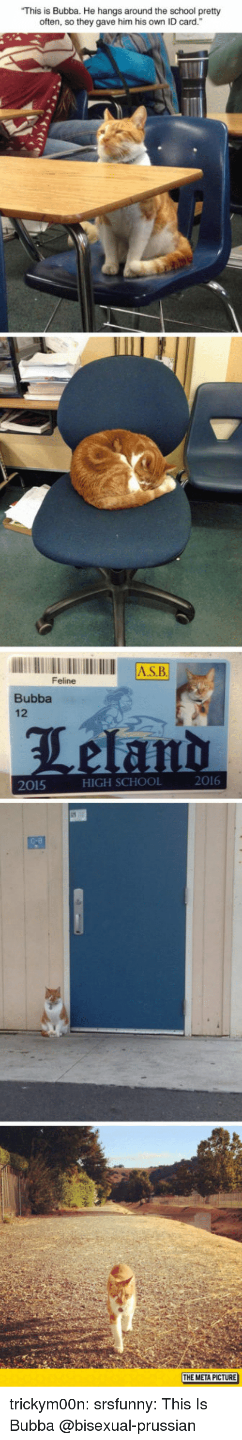 "Bubba: This is Bubba. He hangs around the school pretty  often, so they gave him his own ID card.""  AS.B  Feline  Bubba  12  2016  2015  HIGH SCHOOL  THE META PICTURE trickym00n:  srsfunny:  This Is Bubba  @bisexual-prussian"
